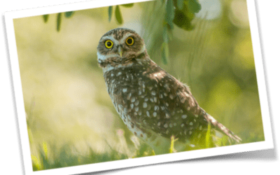 The Wise Young Owl Fable:  A story about the importance  of being vigilant.