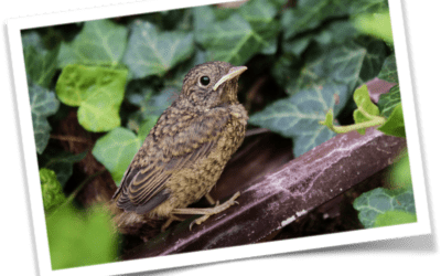 The Non-Stop  Nightingale Fable